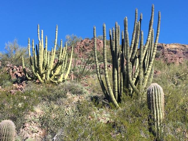January 30, 2020 Organ Pipe Cactus NM