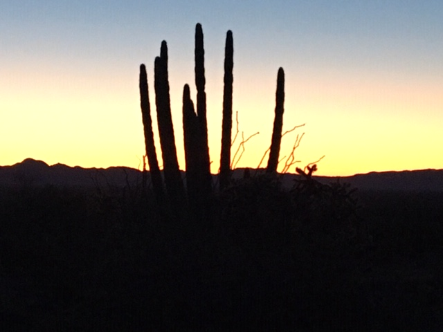 January 30, 2020 Organ Pipe Cactus NM