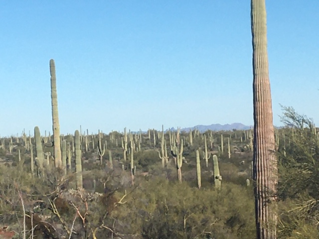 January 31, 2020  Organ Pipe Cactus NM
